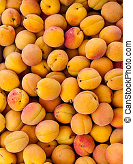 Apricots - Apricot after harvest - Fresh apricot yellow...