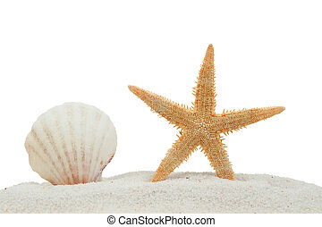 sea shell and starfish on sand isolated on a white...