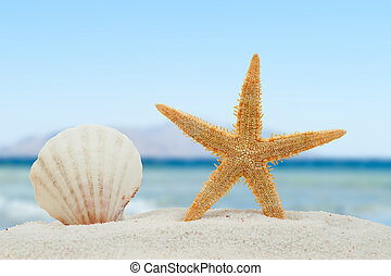 Sea shell and starfish on the beach - Sea shell and starfish...
