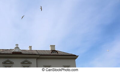 Herring gulls landing on roof - Sea birds flying above white...