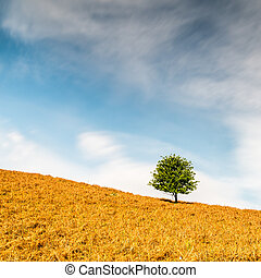 Lone Tree - A lone tree on a hillside