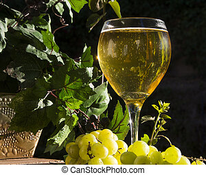 Sparkling Wine - Sparkling wine in the late afternoon sun
