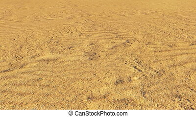 Dry tree in the desert - Sand in the desert closeup and a...