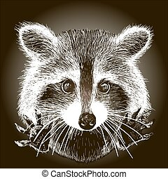 hand drawn raccoon - cute raccoon vector requests cuddle and...