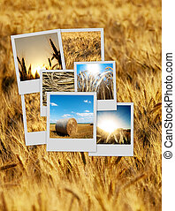 Pile of polaroids over a wheat background - Pile of nature...