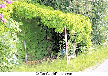 garage  outside covered with climbing plants