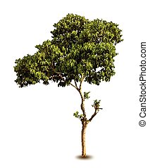 Season tree with green leaves. Vector isolated