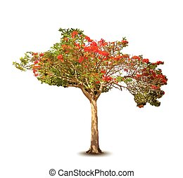 Isolated beautiful blossom vector tree.