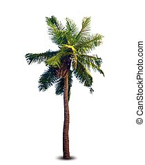 Vector illustration of the palm tree - Vector illustration...