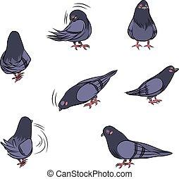 Cartoon Pigeon Actions
