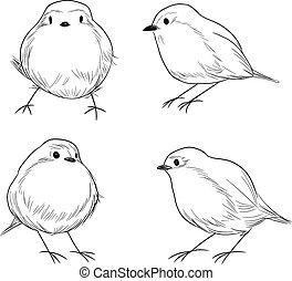 Robin Bird Line Art