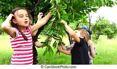 Children eating cherries from the t - Four children eating...