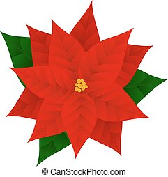 poinsettia - Christmas flowers poinsettia isolated on white...