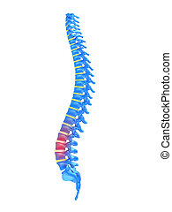 highlighted spine