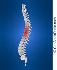 highlighted spine - 3d rendered illustration of human spine