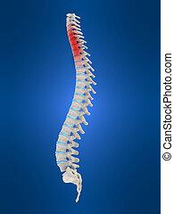 highlighted spine - 3d rendered illustration of human spine