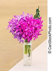 Dendrobium orchid - Close up bunch of pink color dendrobium...