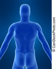 body shape - 3d rendered illustration of a male body shape