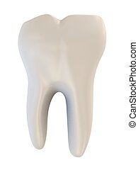human tooth - 3d rendered illustration of a human tooth