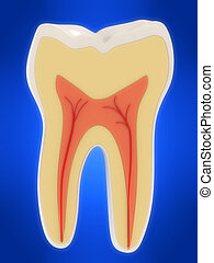 human tooth - 3d rendered illustration from a cross section...