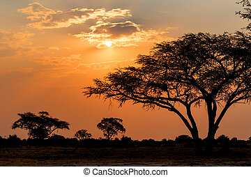 African sunset with tree in front, Hwange national park,...