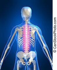 painful spine - 3d rendered illustration of a human skeleton...