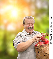 Harvesting an apples - Senior man, harvesting an apples