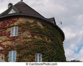 Parthenocissus - Facade of house with Parthenocissus
