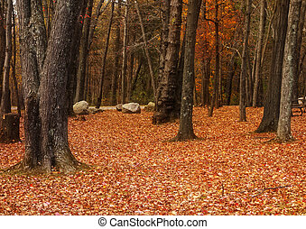 Autumn Forest Landscape - Beautiful orange colors of Autumn...