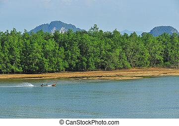 Phang Nga bay - a boat in Phang Nga bay with mangrove forest