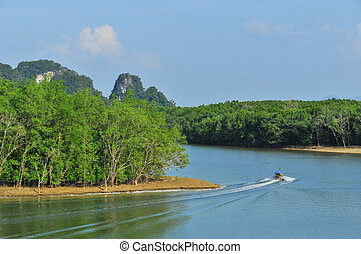 Phang Nga bay - a boat in Phang Nga bay with mangrove forest