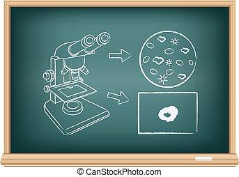 board blood under a microscope