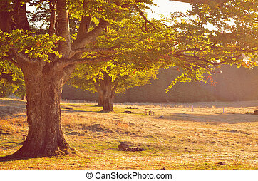 old tree with rich branches