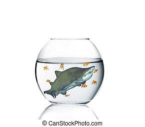 shark in a aquarium