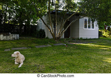 Dog in front of Backyard Building in Garden - A dog resting...
