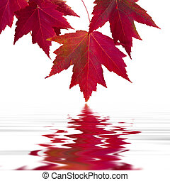 forest - maple leaves with reflection in the water,...