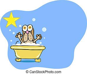 Basset Hound Bath isolated on white