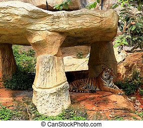 Tigers in zoo and nature - Tigers in zoos and nature