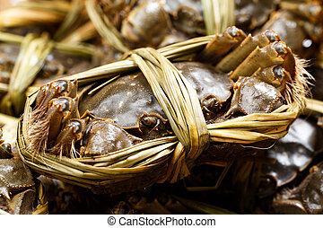 Chinese mitten crabs