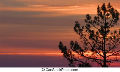 HD silhouette tree on a red sunset - silhouette tree on a...