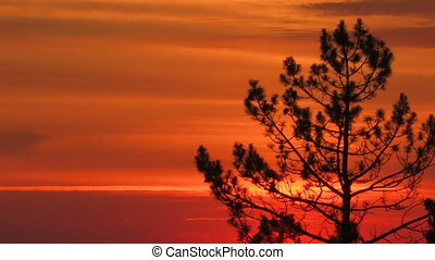 HD silhouette tree on a red sunset