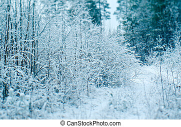 Winter scene .pruce branches. snowy forest