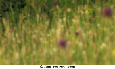 green meadow close up Canon XH A1, FullHD, 1080p, 25fps,...