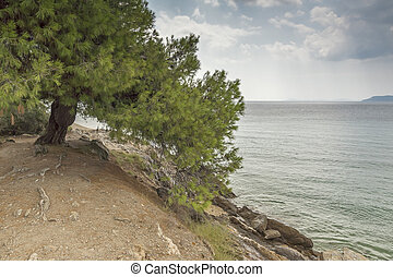 Tripotamos Beach , Chalkidiki, Sithonia, Central Macedonia,...