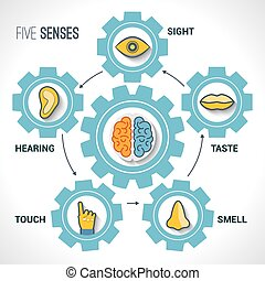 Five senses concept with human organs icons and brain in...