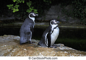 Humboldt penguin Oldest zoos in Europe Republic of Ireland...