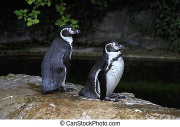 Humboldt penguin Oldest zoos in Europe Republic of Ireland...