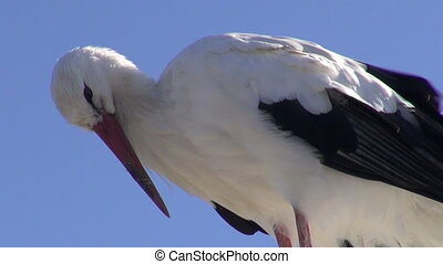 bird white stork (Ciconia ciconia) on sea beach coast lamp...