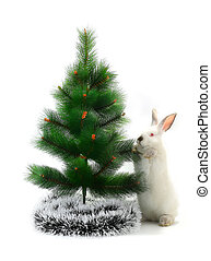 Christmas rabbit - Adorable Christmas rabbit white under the...