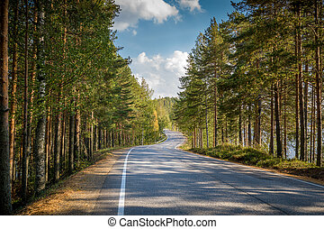 Road through northern forest - Beautiful asphalt road...